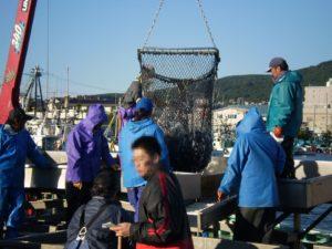北海道の水揚げ