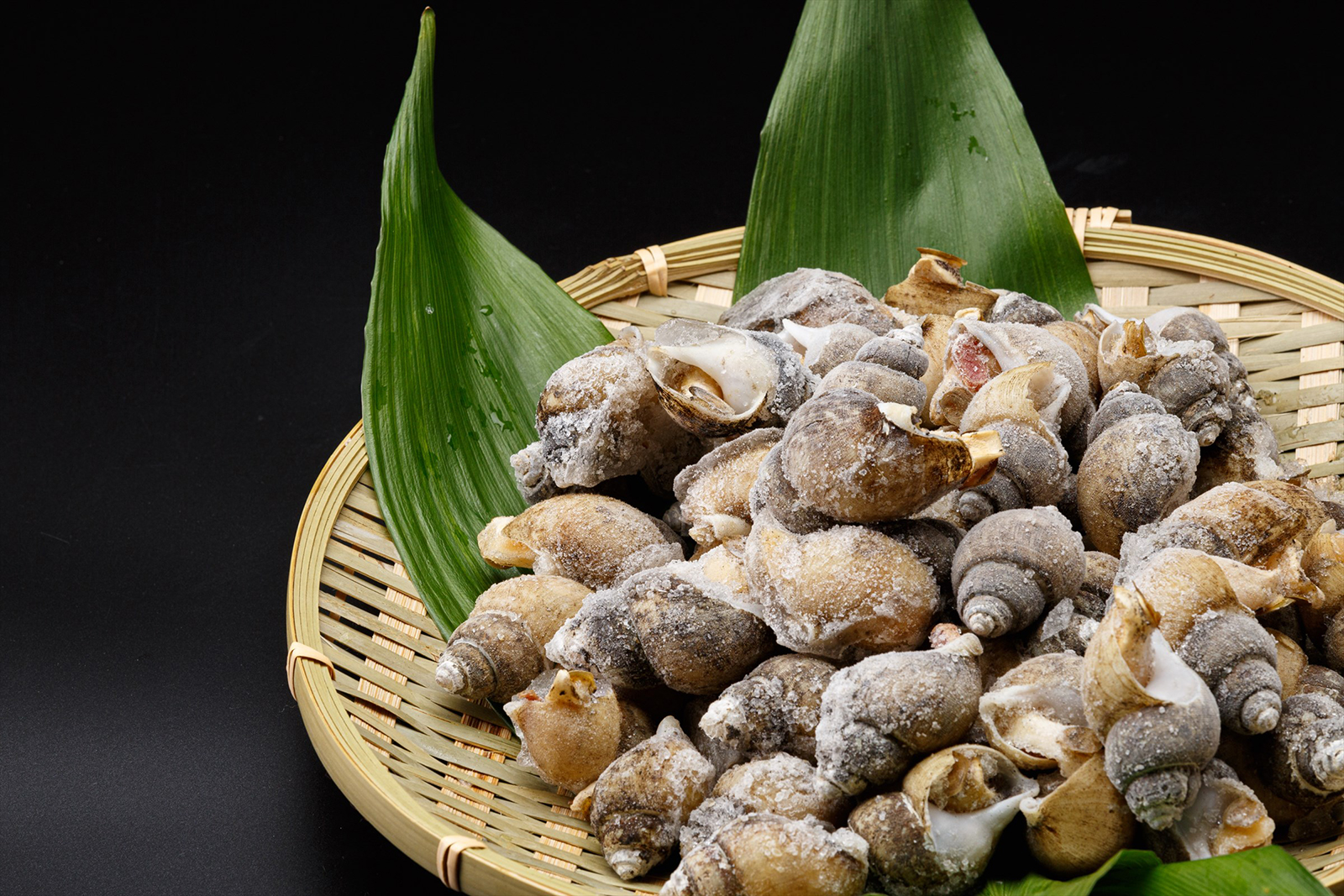 富山湾産殻付きバイ貝
