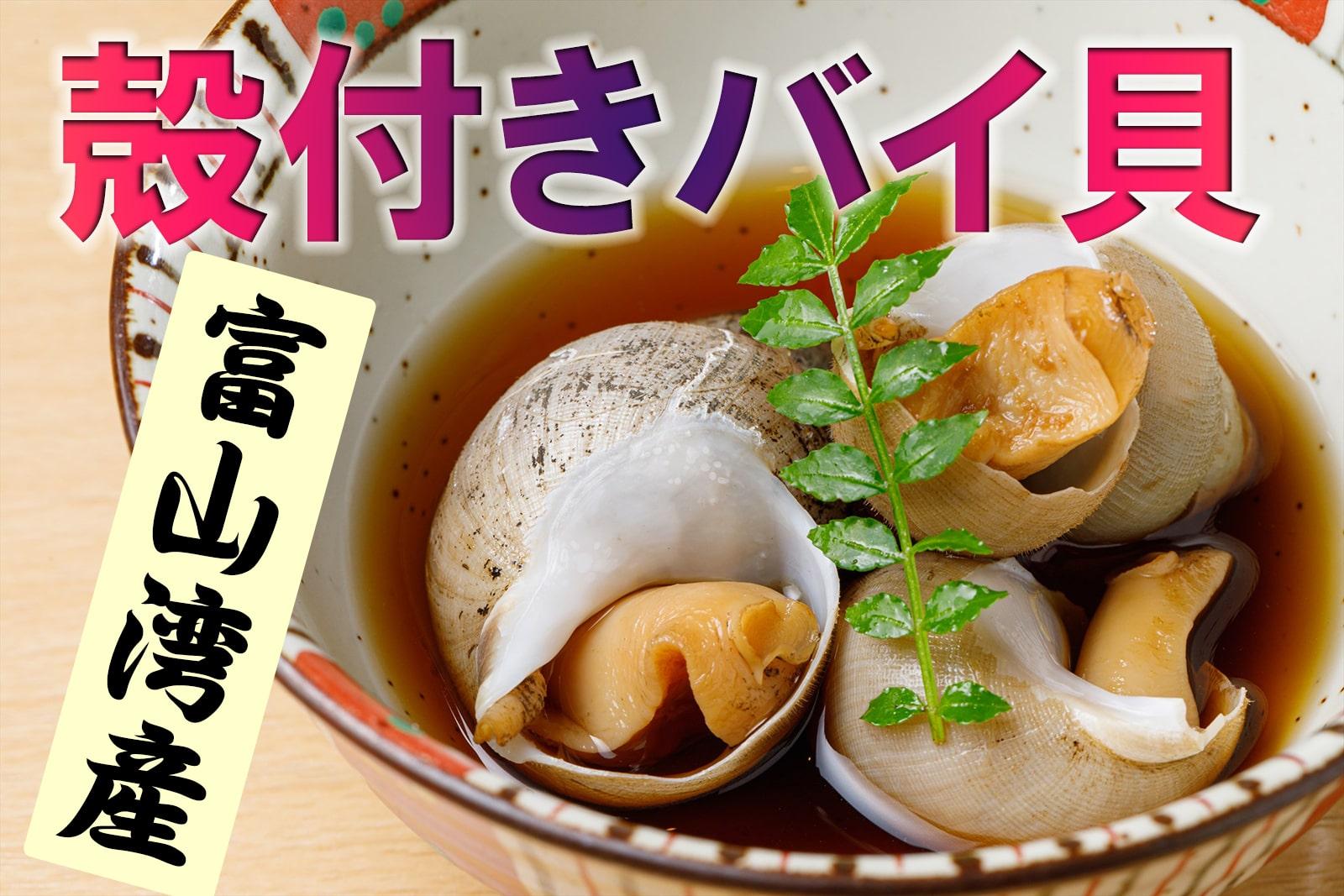 富山湾産・殻付きバイ貝
