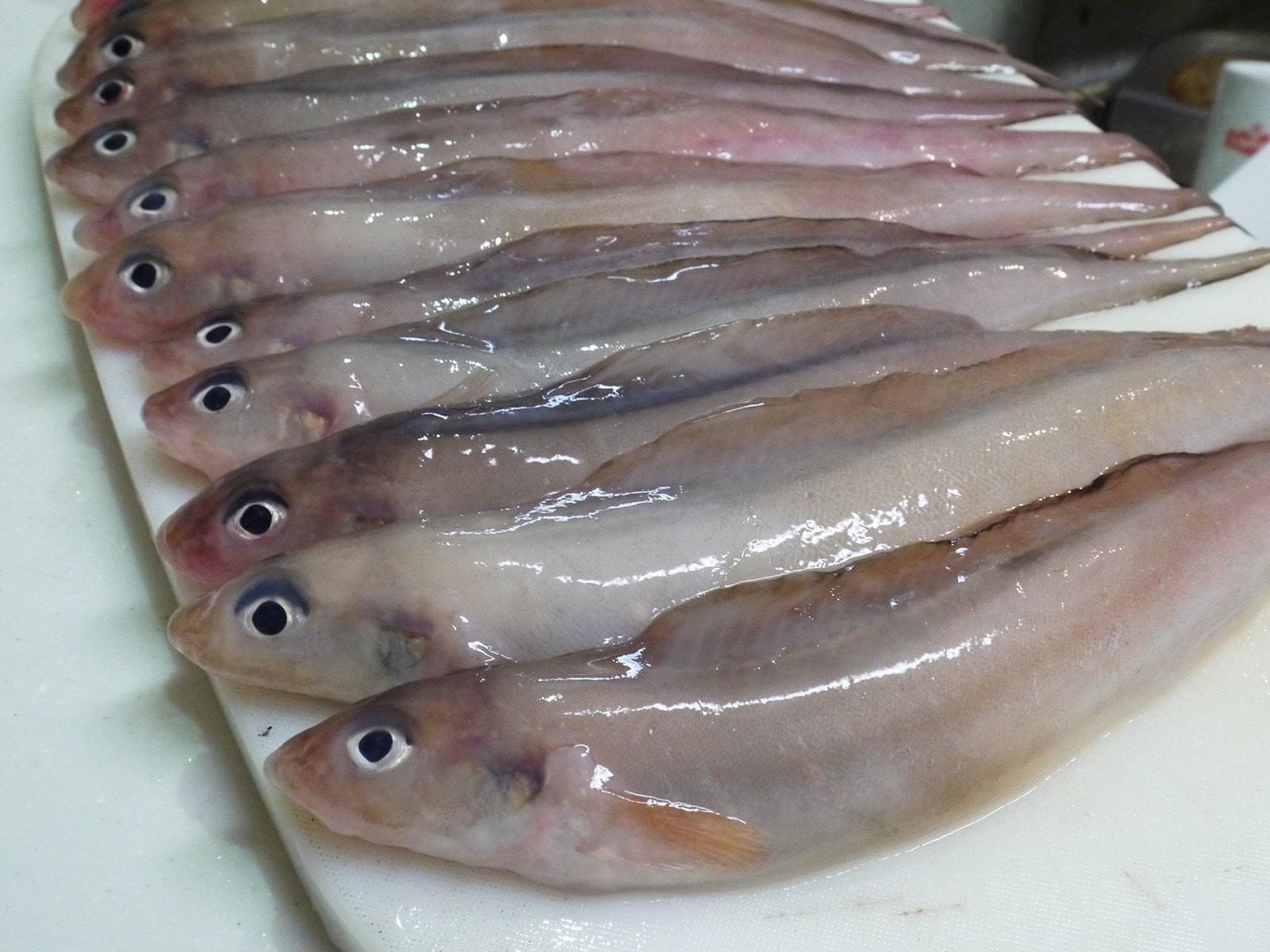 げんげ(幻魚)はこんな魚です。